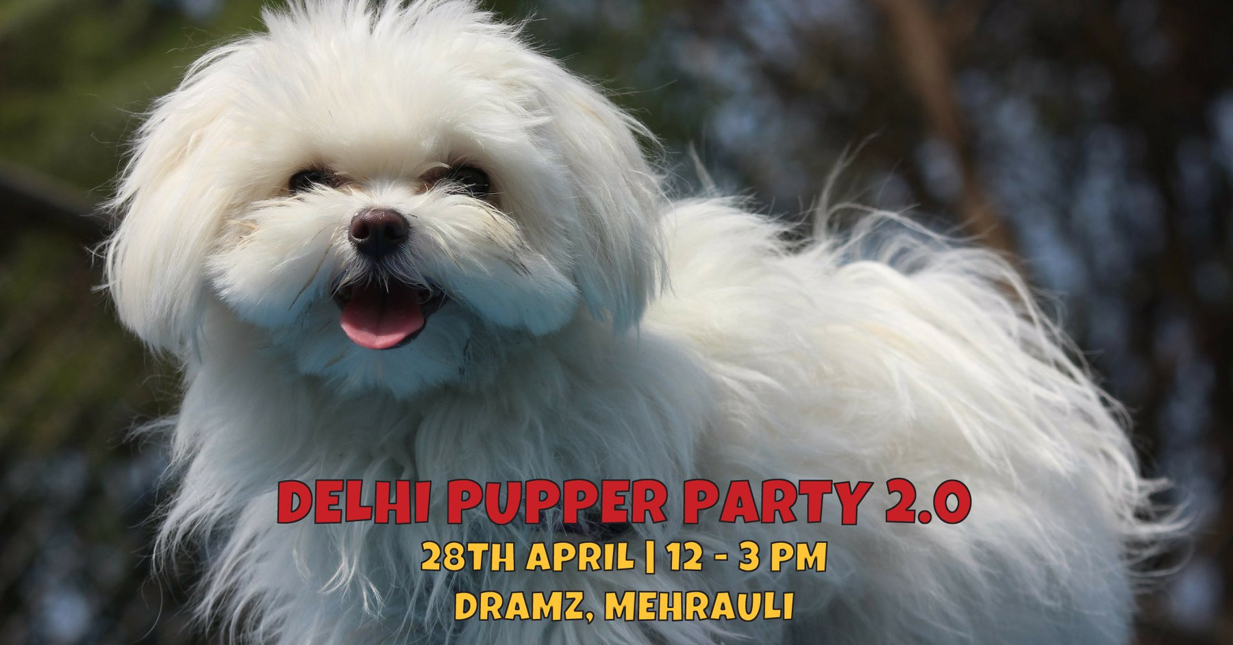 Delhi Pupper Party 2 0 Read More